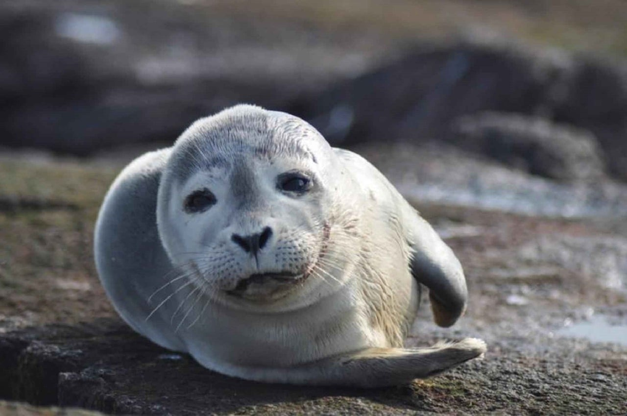 phoque-slowlife-lechamandigital