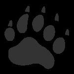 icone bear